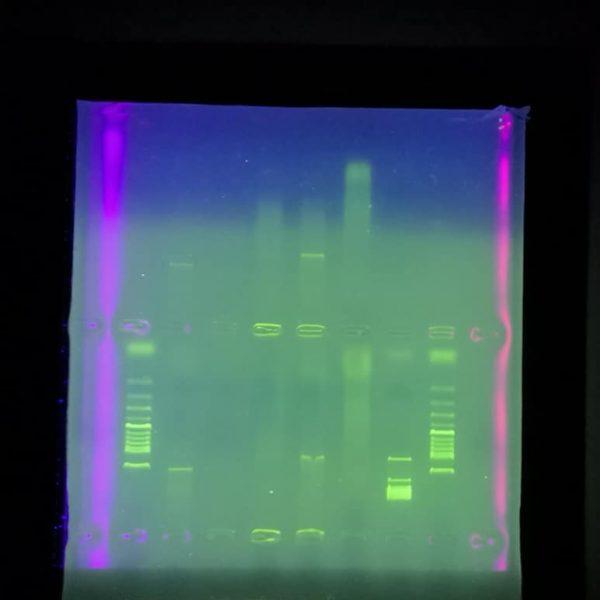 Finally built myself a real UV transiluminator